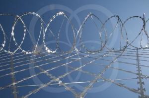 concertina-dupla sobre rede-2